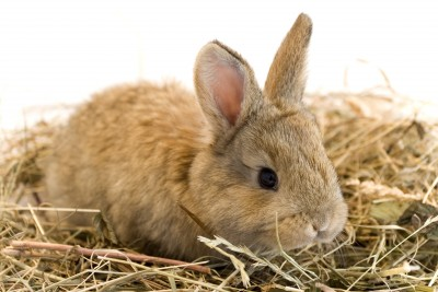 pet supplies for rabbits