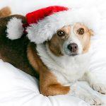 153905397-aspca-holiday-pet-health-tips-632x475