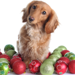 pet-holiday_cropped