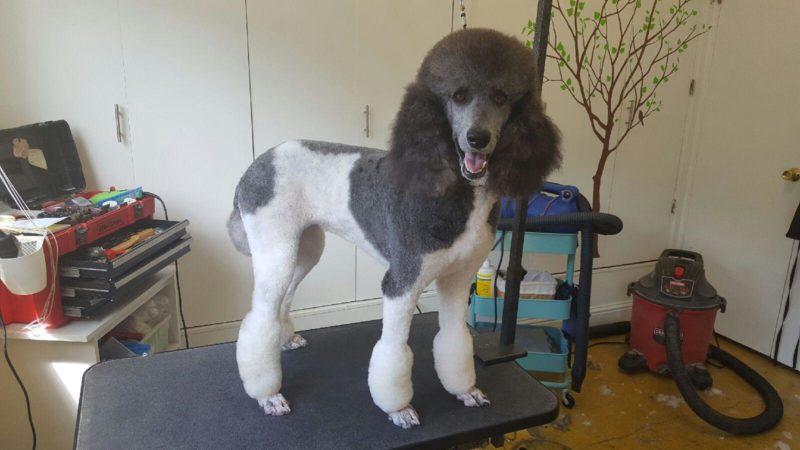 dog grooming alameda