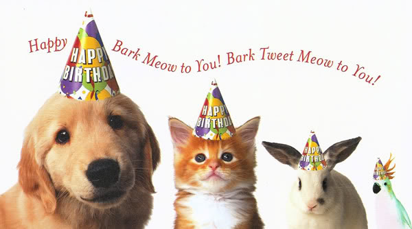 Have Your Party with Our Pets!