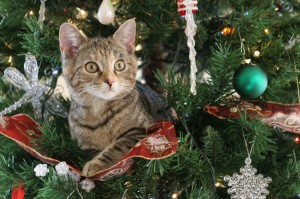 Holiday Safety Hazards for Pets