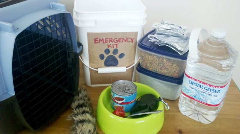 What's In Your Pet's Escape Pod?