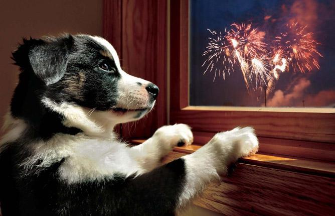 Keep Your Pets Safe During Firework Season